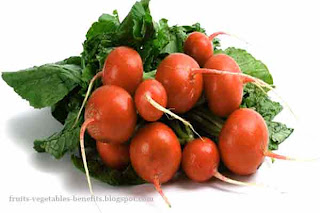 benefits_of_eating_radishes_fruits-vegetables-benefits.blogspot.com(benefits_of_eating_radishes_4)