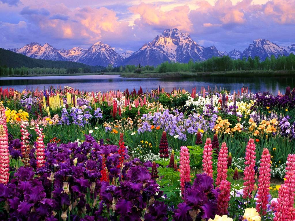Beautiful Wallpapers Nature Flowers