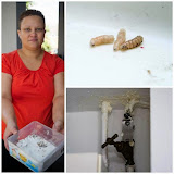 Mulher descobre morte de vizinho após larvas que comiam corpo em decomposição caírem do andar de ci