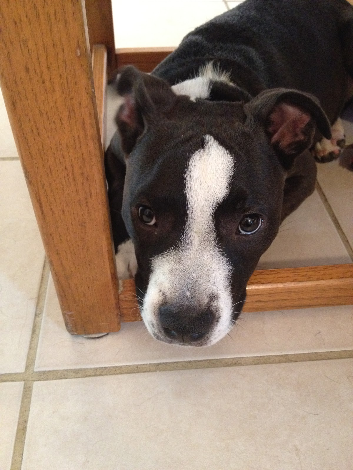 Dogs To Adopt In Mankato Mn