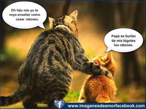 ... gatos graciosos ~ Imagenes Bonitas para Facebook Amor y Amistad