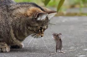 Imagenes Graciosas de Animales, Gatito Lindo