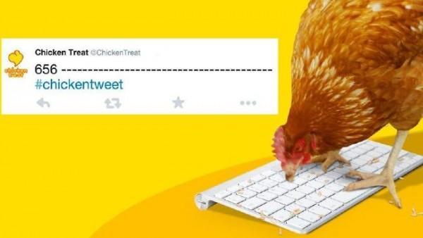 عجائب الدنيا وهل تعلم - دجاجة تمتلك حساب تويتر