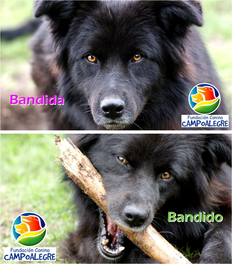 legislacion animales de compania: