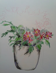 Flowers in coloured pencil