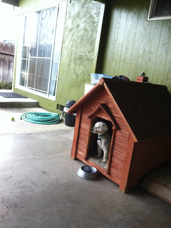 Bizzy in his Doghouse
