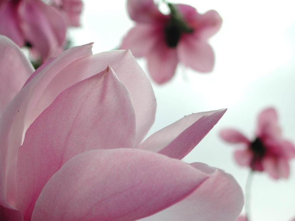 http://2.bp.blogspot.com/-bJF_Qw9reuY/TVVvfXOVyxI/AAAAAAAAAAw/J4LDD-uG4fo/s1600/flower-wallpapers.jpg