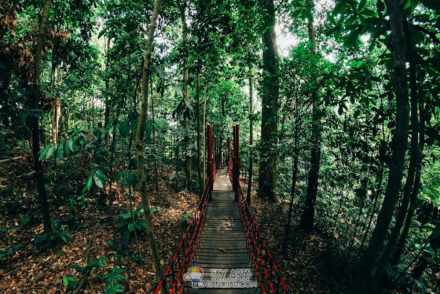 Hanging bridge in Bukit Nanas that leads to KL Tower