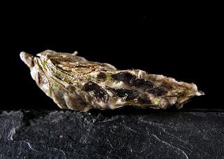 acuEo·ostras del Eo Una ostra bien colocada