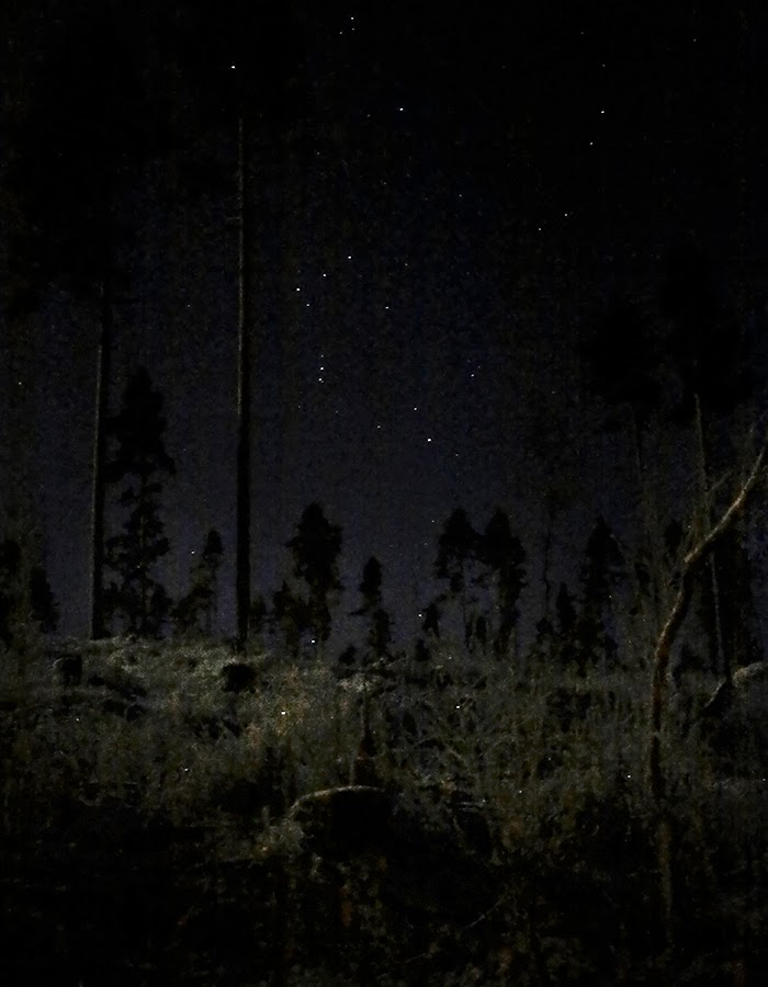 forest and stars photo by Kreetta Järvenpää www.gretchengretchen.com