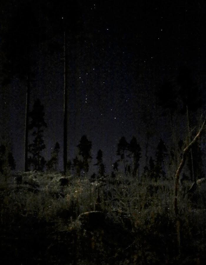 forest and stars photo by Kreetta Järvenpää www.gretchengretchen.com