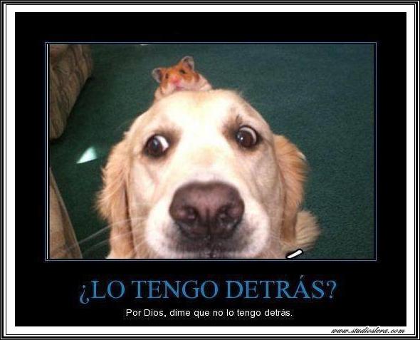 studioslera.com perro raton