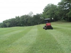 Jenis rumput di Malaysia