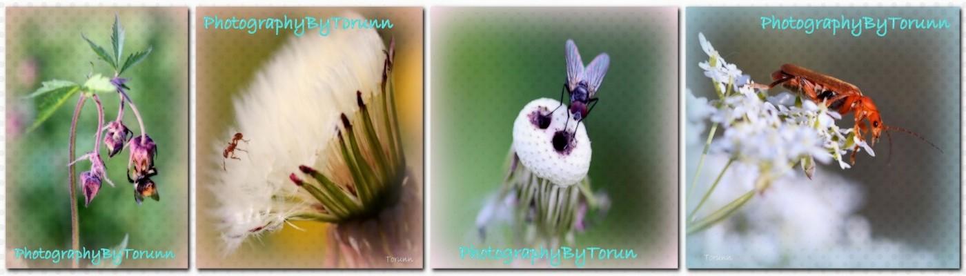 PhotographyByTorunn
