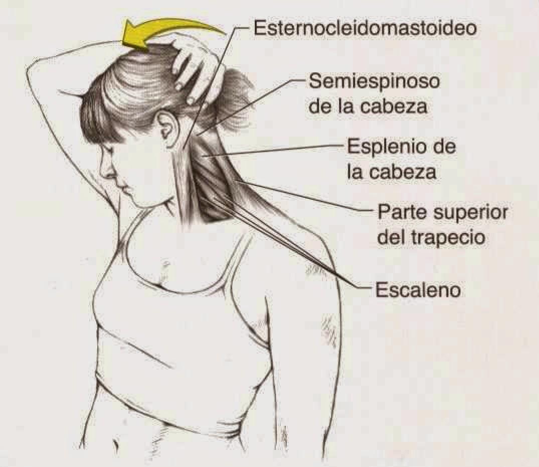 Criss Cross Madrid Pilates: Estiramientos de cuello