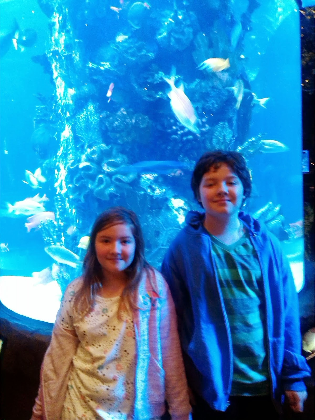Visiting an Aquarium