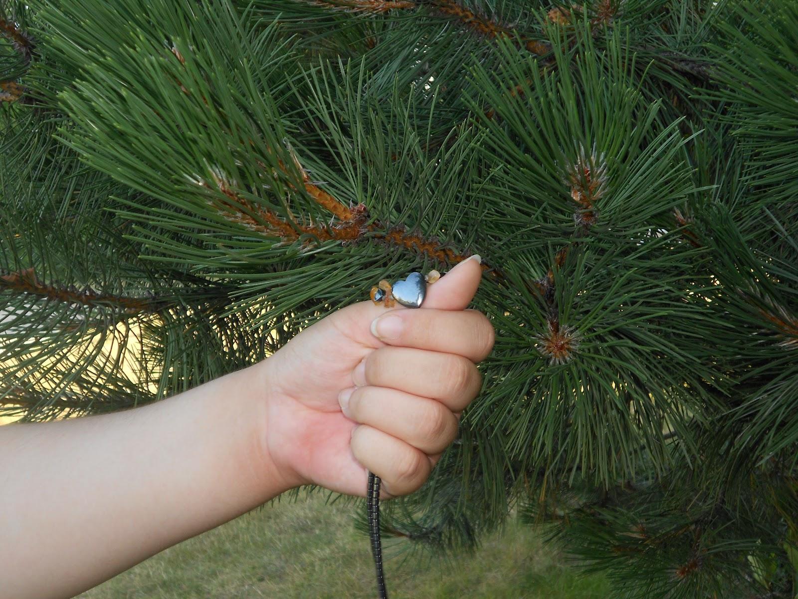 Pine Tree Leaf Pictures Gymnosperm Leaf Pine Tree