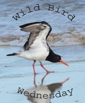 Stewart's Wild Bird Wednesday