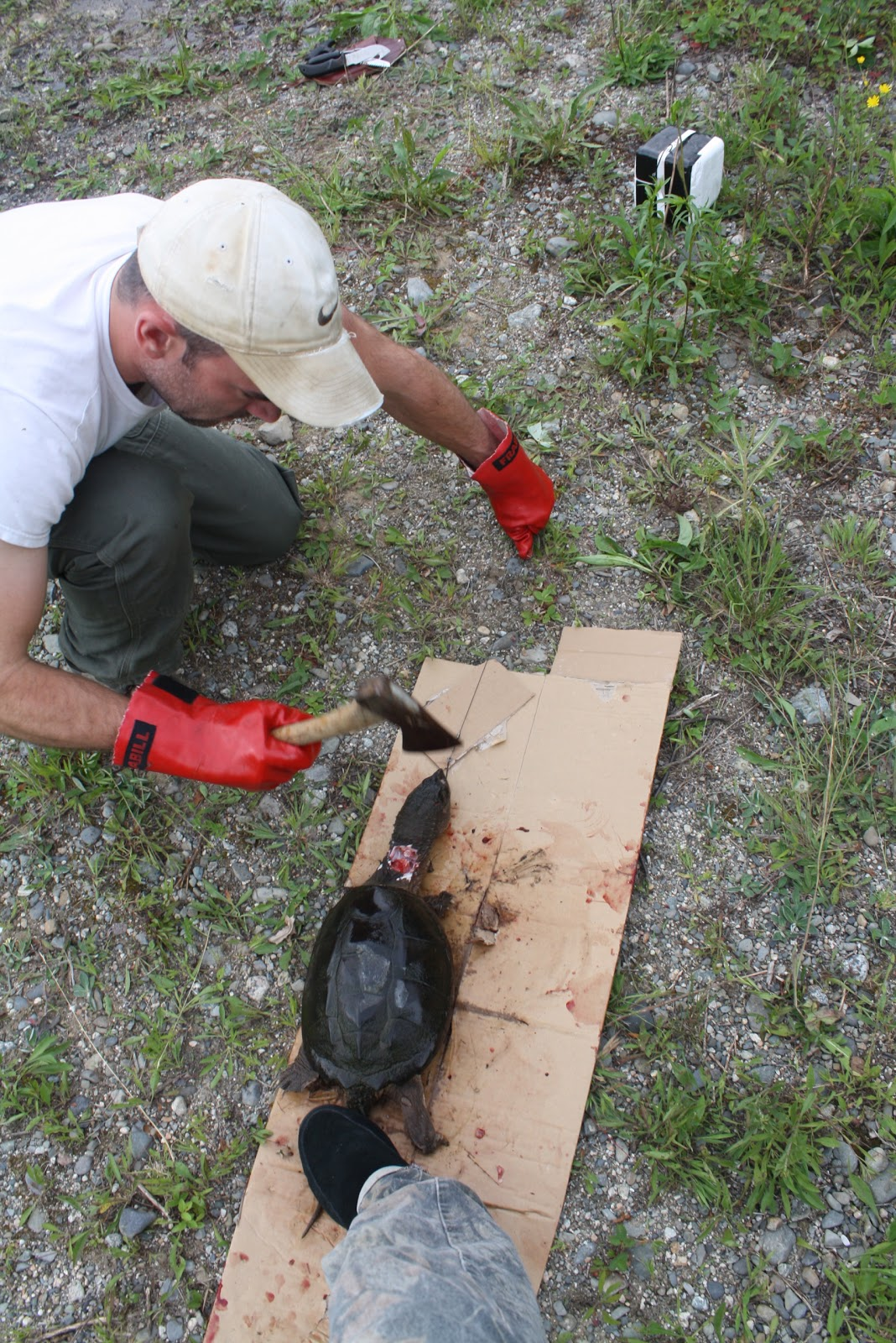 the maine outdoorsman snapping turtle surprise