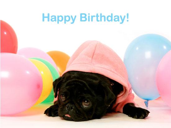 pug_birthday.jpg
