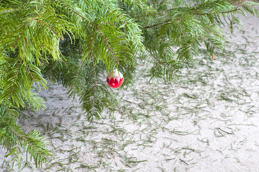 recycle your old christmas tree at bridal cave - Old Christmas Tree