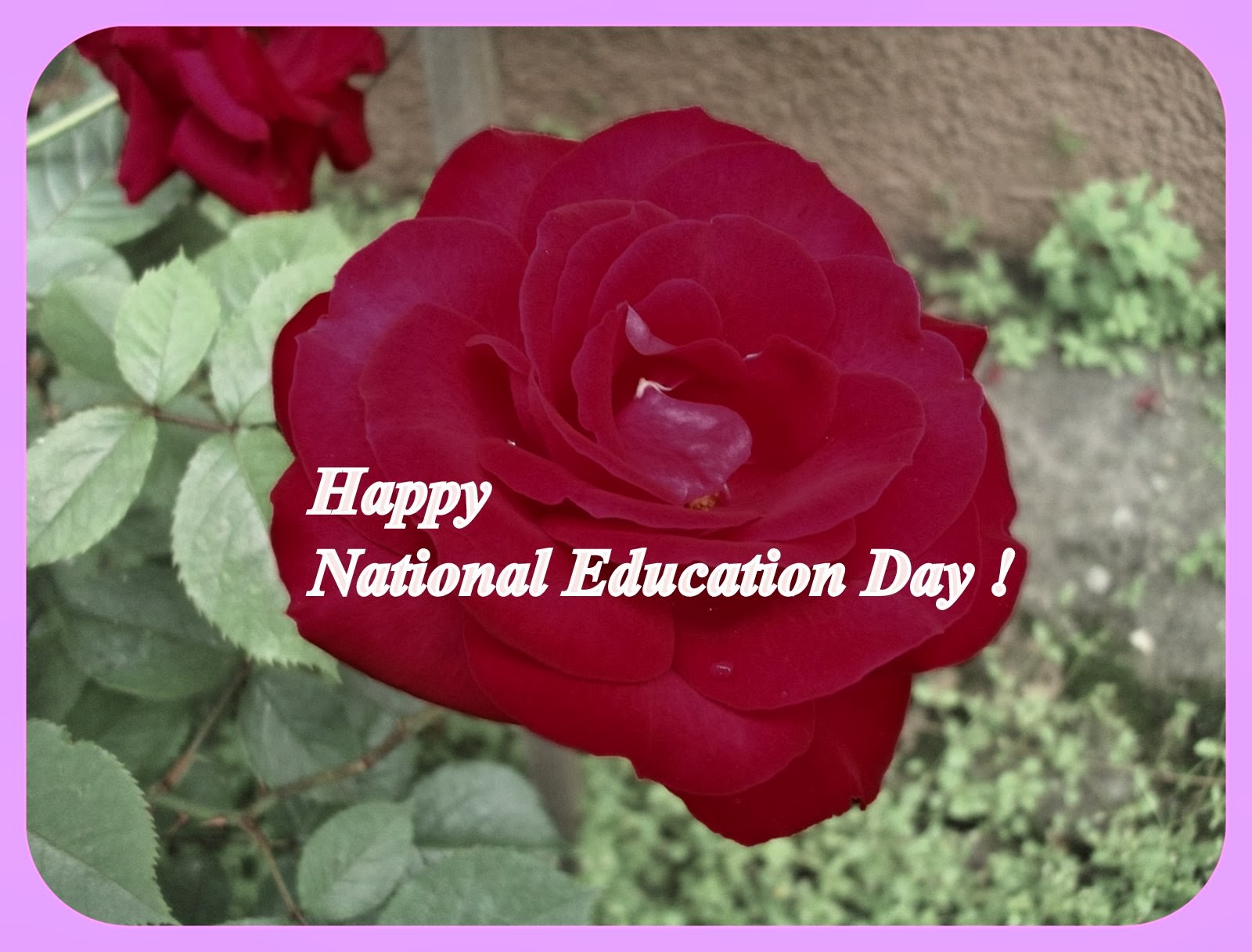 In English, Pleaseee...: National Education Day Z Punktu