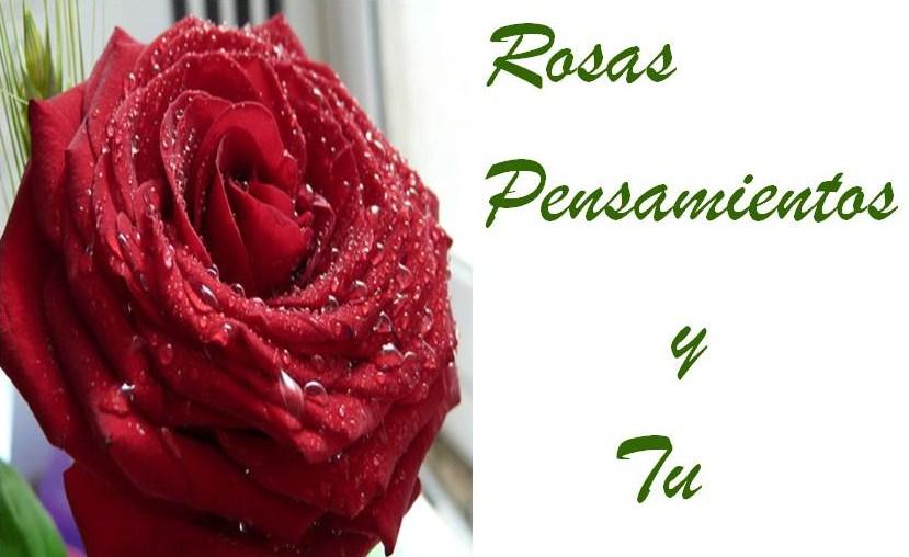 Flores,Rosas y mi Sentir