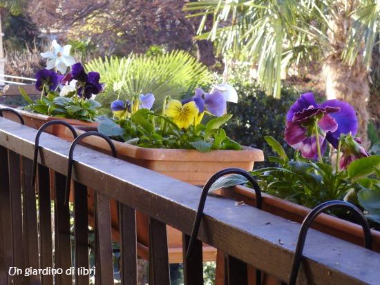 ungiardinodilibri viole sul balcone