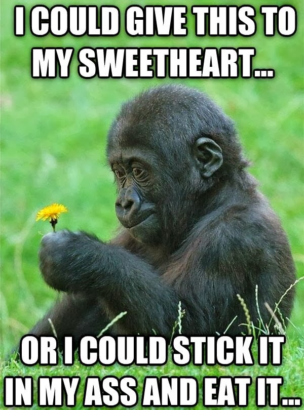 30 Funny animal captions - part 18 (30 pics), baby gorilla and flower captioned pics