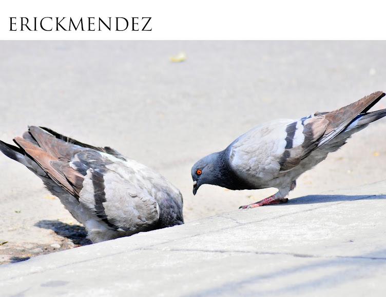 Erick Mendez