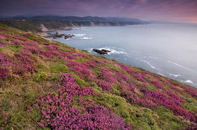 Campo de flores junto al mar - Seascape