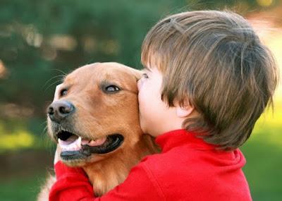 amor por las mascotas