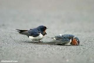 Burung selalu bermasalah