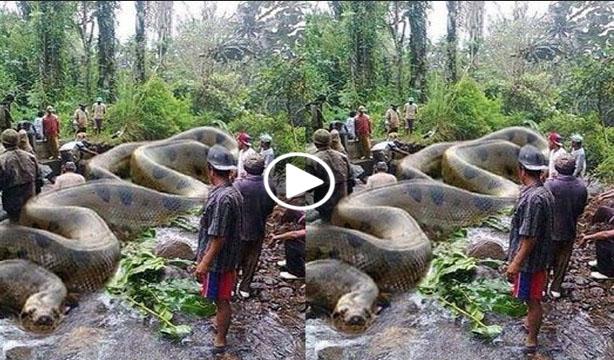 anaconda picture video