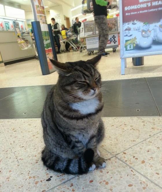 Brutus si Kucing Supermarket nongkrong di depan supermarket