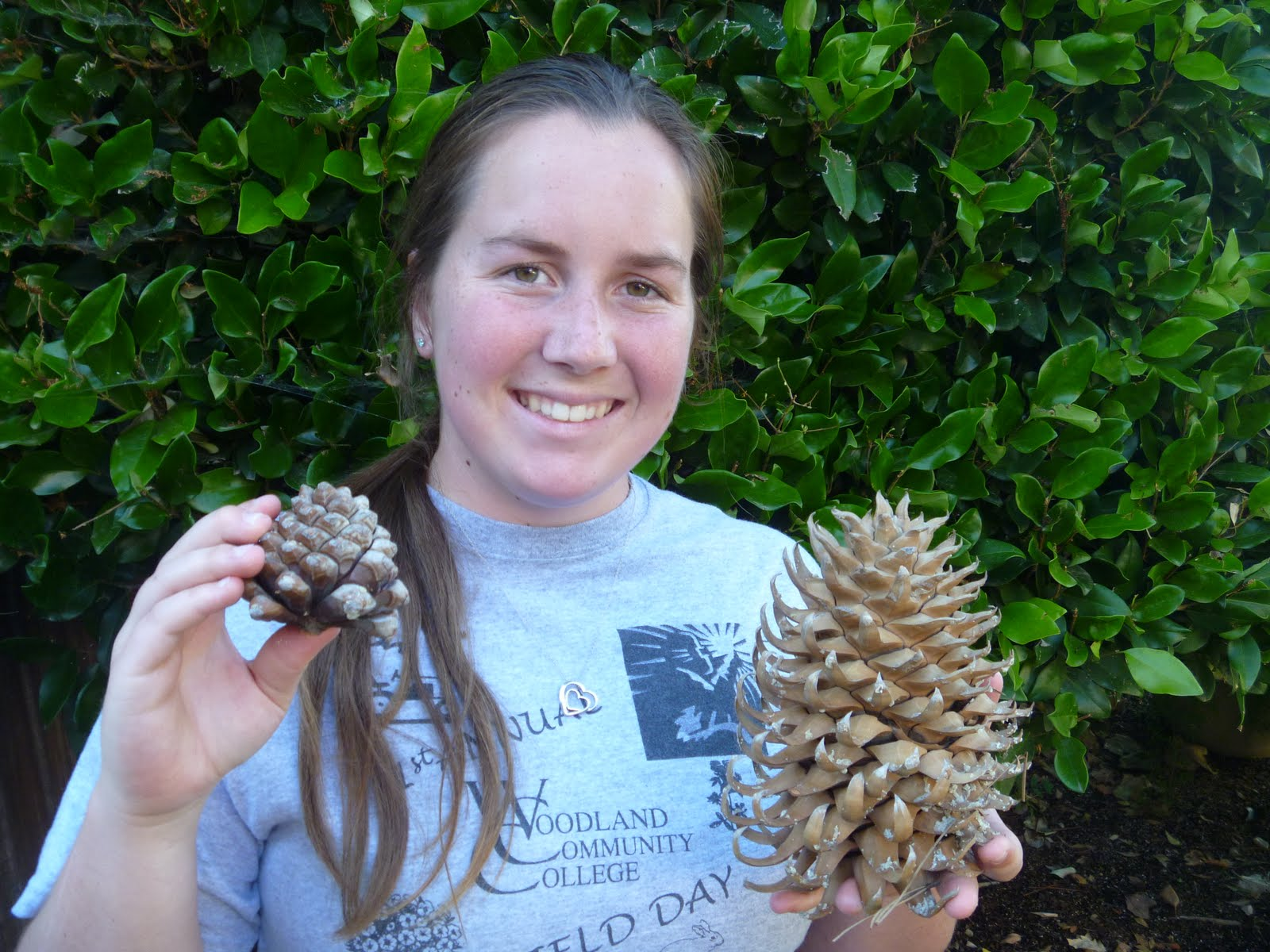 Katie's Bio Scavenger Hunt: Gymnosperm cone: Pine Cone