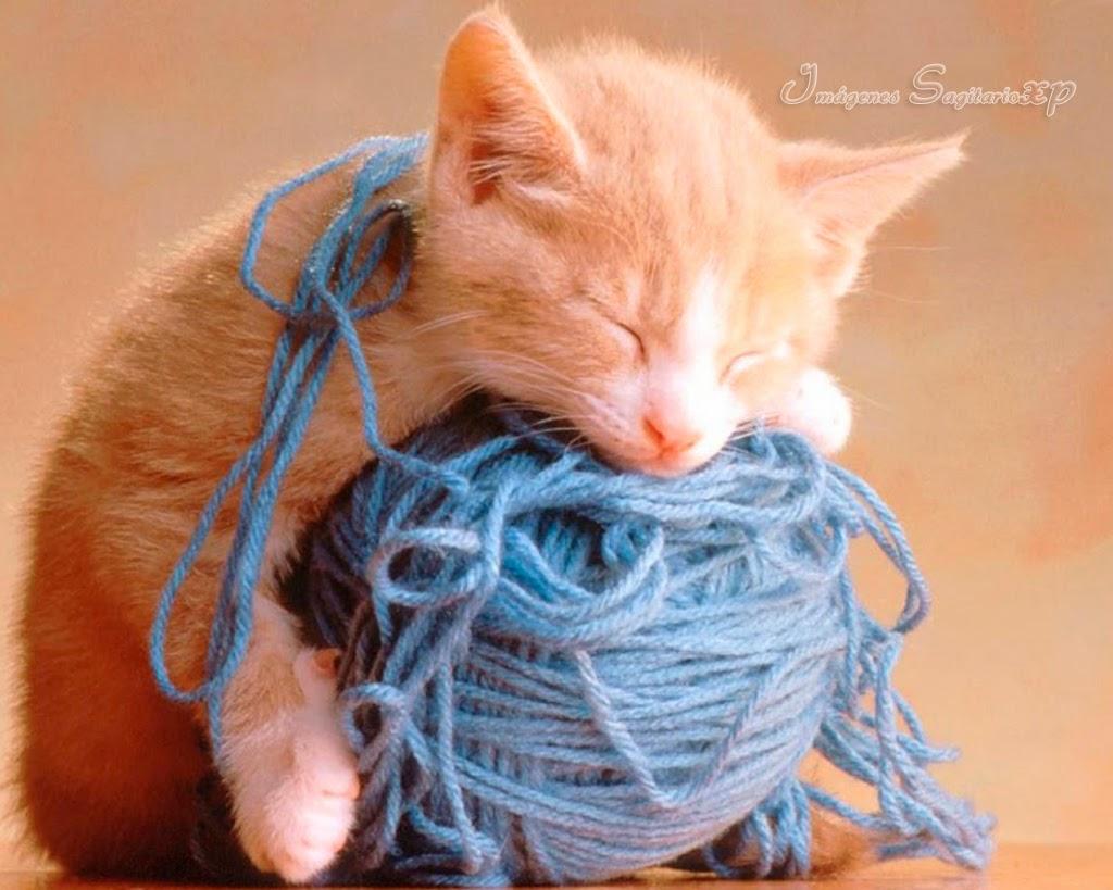 Gatito-durmiendo-sobre-ovillo-de-lana.jpg