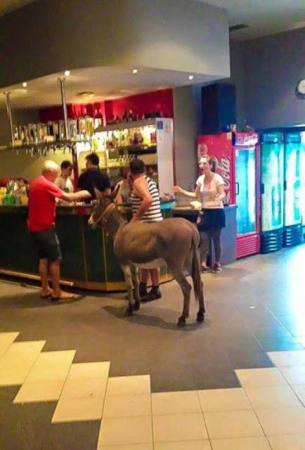 burros amigos borrachos
