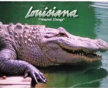 Louisiana 'Yard Dog'