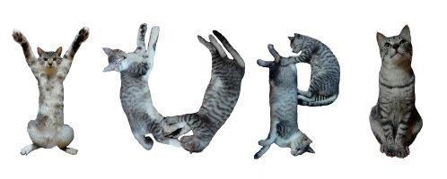 Neko Font - Tipografia - Gatos