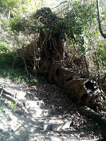 Hollow Root