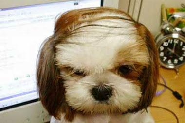 The author's dog