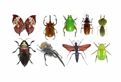 LOS INSECTOS