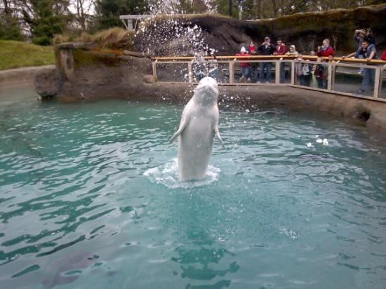 Holiday To Point Defiance Zoo And Aquarium Choice Your