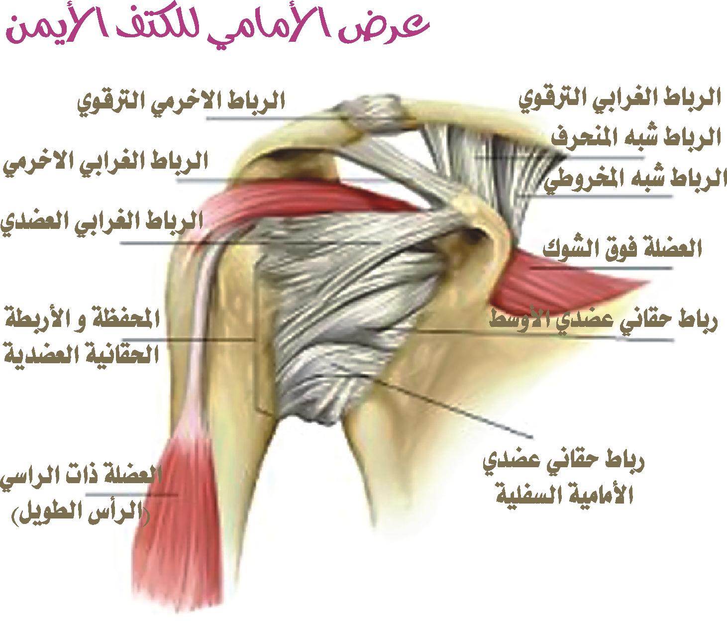 أربطة الجسم المختلفة من صنعها وربطها وشد احكامها Image%2B2