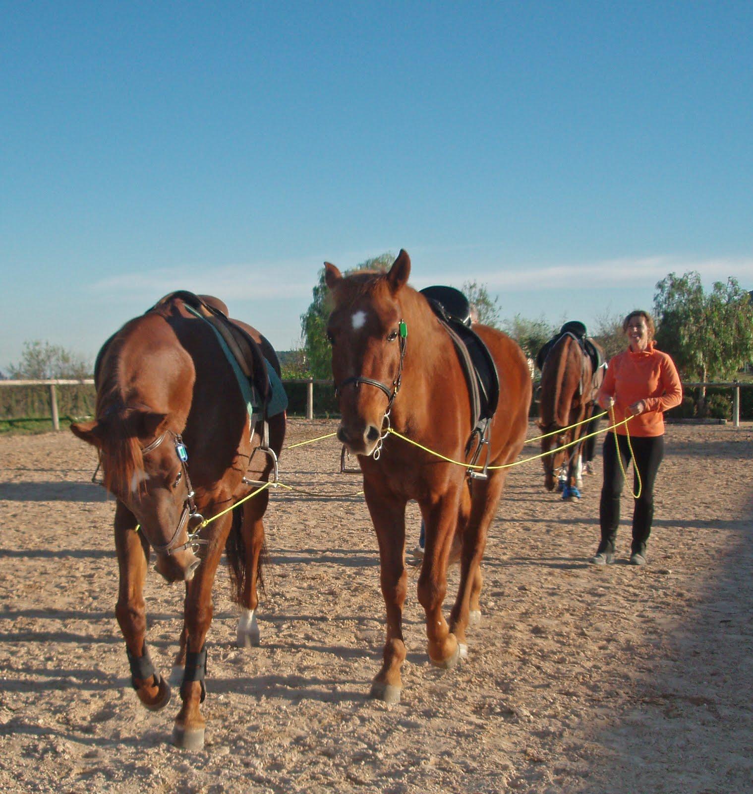 Dar a conocer el comportamiento del caballo.