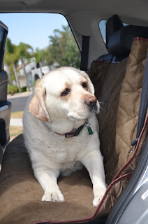 Deluxe Pet Car Seat Cover 2