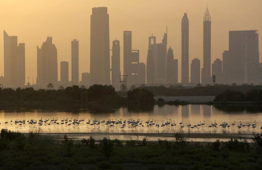 In this Wednesday, May 28, 2014 photo, with skyscrapers along the Sheikh Zayed highway, at background, pink flamingos look for food by the creek, at the Ras Al Khor Wildlife Sanctuary in Dubai, United Arab Emirates. Beneath a glitzy skyline wooden boats ply Dubai Creek, the historic heart of a city that was transformed in little more than a generation from a tiny pearling and fishing port to a global trading hub.