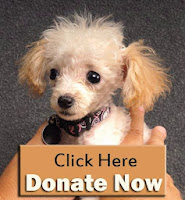 http://www.youcaring.com/nonprofits/five-dogs-need-medical-attention/101445
