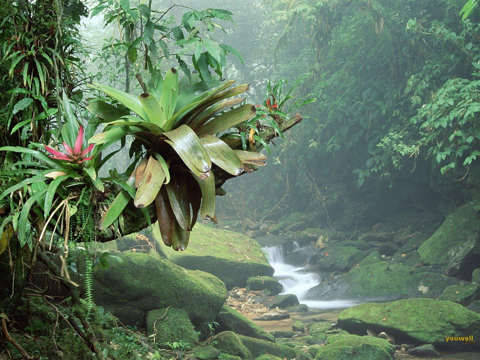 nature wallpaper tropical forest wallpaper i celebes